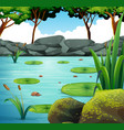 scene with water lily in the pond vector image vector image