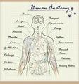human anatomy diagram vector image vector image