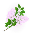 lilac white twig with flowers and leaves vintage vector image vector image