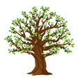 one old oak tree with leaves isolated vector image vector image