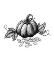 pumpkin with leaves and seeds hand drawn sketches vector image vector image