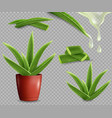 aloe vera medicinal plant set isolated vector image vector image