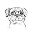 cute pug dog t-shirt print design cool animal vector image