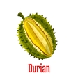 Durian exotic fruit isolated object vector image