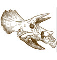 engraving of triceratops dinosaur vector image vector image