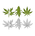 marijuana mature plant with leaves and buds vector image vector image
