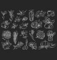 sketches of vegetables vegetarian food vector image vector image