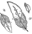 doodle ethno feathers set vector image