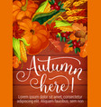 autumn here seasonal foliage and harvest poster vector image vector image