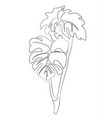 branch of a flower lines vector image