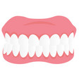 dental jaw model cartoon vector image