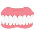 dental jaw model cartoon vector image vector image