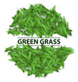 square template grass green leaf vector image vector image
