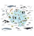 Antarctic antarctica flora and fauna map flat