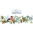 bullfinch christmas border vector image vector image