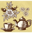 Chamomile tea and rosehip vector image