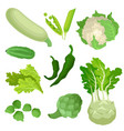 flat set of organic green vegetables fresh vector image