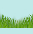 grass in droplets water seamless border vector image vector image