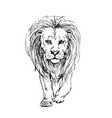 sketch by pen of a lion front view vector image