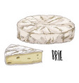 brie full color cheese vector image vector image