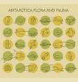 flat antarctica flora and fauna elements animals vector image vector image