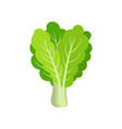 flat icon of fresh collard leafy green vector image vector image