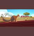 numbat enjoying sun in australia desert