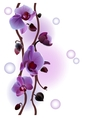 Seamless background with orchids branch vector image vector image