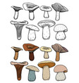 set of forest mushrooms vector image vector image