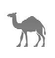 camel strips vector image