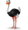 cute ostrich cartoon vector image