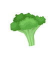 flat icon of fresh broccoli organic food vector image vector image