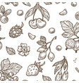 berries sketch pattern seamless background vector image