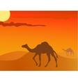 camel in the savanna vector image vector image
