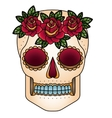 Isolated skull head design vector image vector image