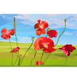 Poppy red flowers on field vector image