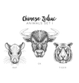 set of hand drawn animal vector image