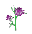 straw flower vector image