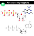 adenosine triphosphate molecular structure vector image vector image