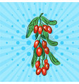 barberry with green leaf on blue background vector image