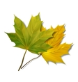 Green maple leaf isolated on white background vector image vector image