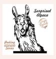 peeking surprised alpaca - funny alpaca vector image vector image