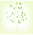 Young tree with roots a EPS10 vector image
