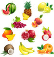 Set of tropical fruits with leaves and flowers vector image