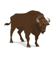 bison wild mammal hunting sport vector image vector image
