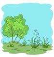 garden with bush vector image vector image