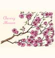 japanese sakura blooming cherry magnolia vector image