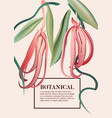 pink ylang ylang watercolor wild herb flower vector image
