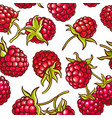 raspberry berries pattern vector image