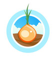 round logo for onion tradeing - colorful symbol vector image